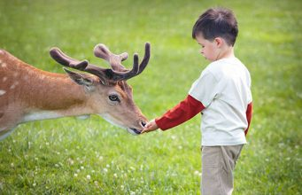 child and a deer